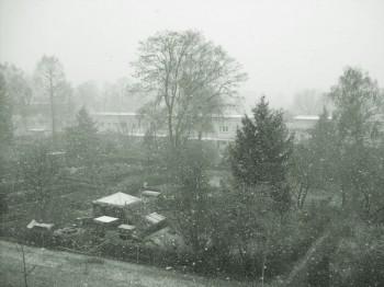 Frühling in Frankfurt