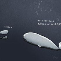 Ein Wal ist nicht so erfreut, zwei andere zu treffen