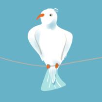 Weissser Vogel auf grauem Kabel vor blauem Hintergrund