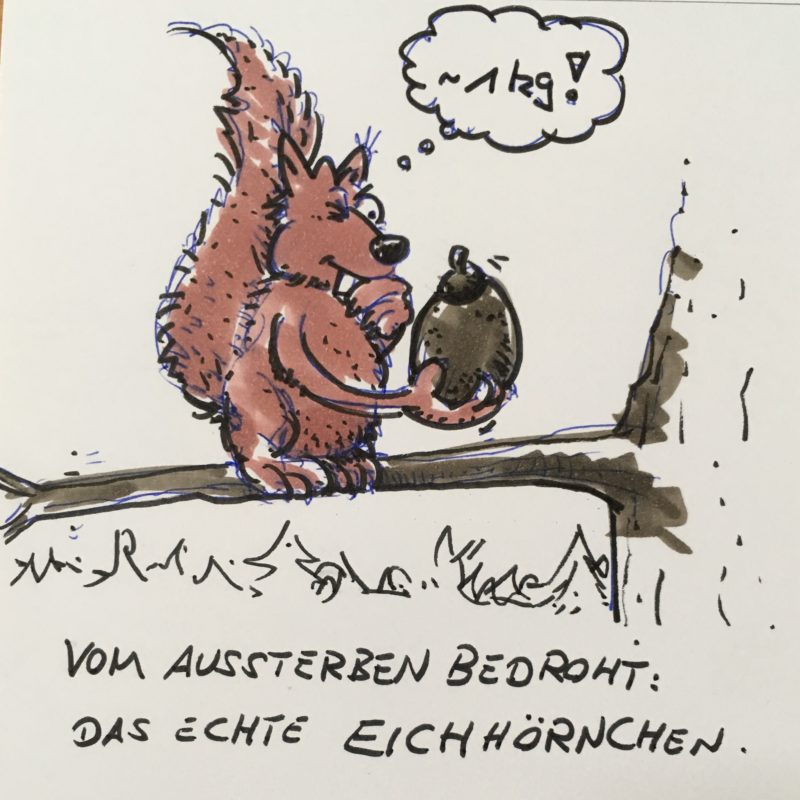 Cartooneichhörnchen sitzt auf einem Ast und schätzt das Gewicht der Haselnuss auf 1kg