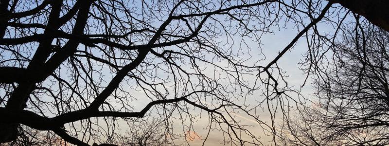 Sonnenuntergang zwischen schwarzen Bäumen, im Hintergrund klein die Skyline links und der Ginnheimer Spargel rechts